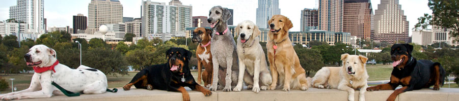 Austin Pets Directory Magazine circulates throughout Austin Texas. The magazine for Austin Texas pets and their parents.