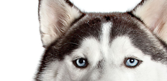 Free Eye Exams For Service Animals in May
